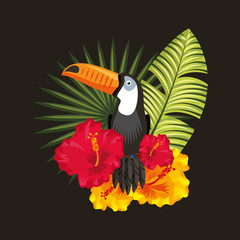 tropical toucan hibiscus palm leaves black background vector illustration