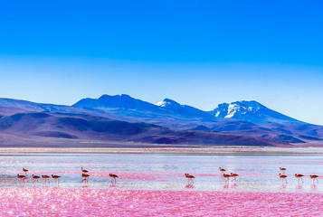 View on group of Flamingos by lagoon Colarada in the mountains of Bolivia Wall mural
