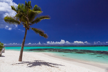 palm on a white sand beach; ocean and deep blue sky, Mauritius islan in Indian ocean