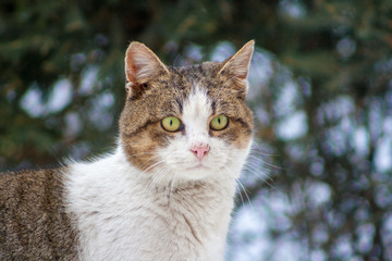 cat with raised ears in winter