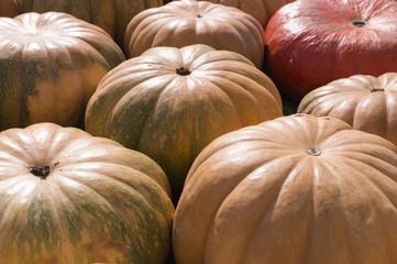 pile of various pumpkins at autumn harvest festival. background, vegetables.