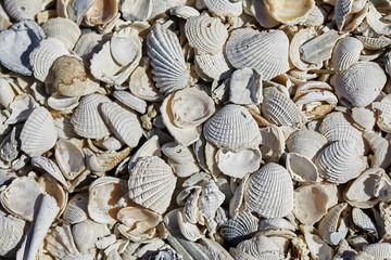 Random Shells