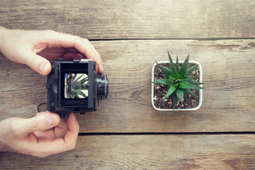 Photographer taking a picture of succulent using antique camera. Top view.
