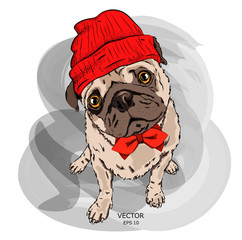 Hipster dog in cap. Vector illustration