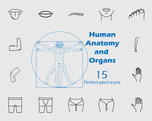Human anatomy icon set. Premium quality graphic design. Signs, outline symbols collection, simple thin line icon for websites, web design, mobile app, info graphics