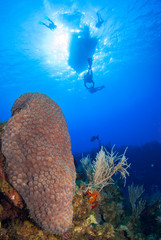 A boat has moored up above a tropical coral reef in Grand Cayman in the Caribbean to drop off scuba divers. The warm blue water is home to many species of hard and soft coral