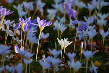 Flowers in breeze