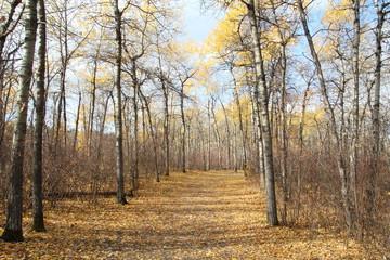 Leafs On The Trail, William Hawrelak Park, Edmonton, Alberta