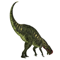 Altirhinus Dinosaur Tail - Altirhinus was an iguanodont herbivore dinosaur from the Cretaceous Period of Mongolia.
