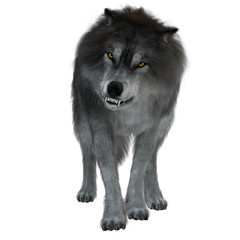 Dire Wolf on White - The Dire Wolf was a prehistoric carnivore that lived in North and South America during the Pleistocene Period.