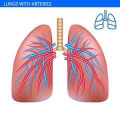 Human lungs anatomy with artery, circulatory system realistic illustration front view in detail. Lunge exercise. Right and left lung with trachea. Healthy lung. Respiratory system.