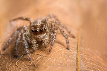 Macro background spider on leaf