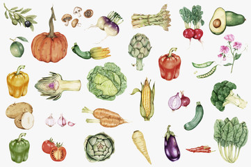illustration of Hand drawn vegetable collection