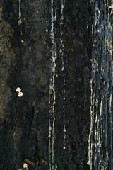 Resin Tree Wood Bark Nature Plant Natural .