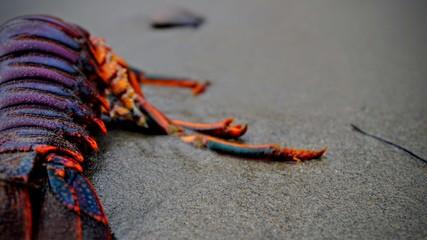 Huge Lobster