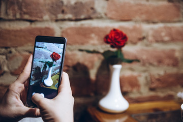 phone in woman hand make picture of red rose for social networks