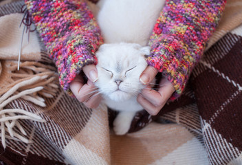 Content Cat with Closed Eyes Being Pet by Human Hand. Cat relaxed.