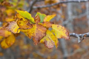 autumn beech leaf in wood