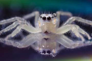 Macro spider white