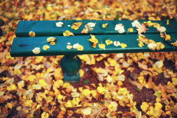 background of fallen leaves / yellow and orange fallen autumn leaves on the ground in a city park. Texture of autumn leaves, concept of autumnal picture
