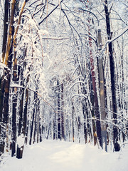Picturesque picture of snowy trees in forest