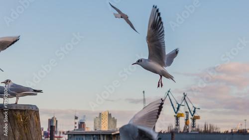 Möwen Am Hafen Von Hamburg Stockfotos Und Lizenzfreie Bilder Auf