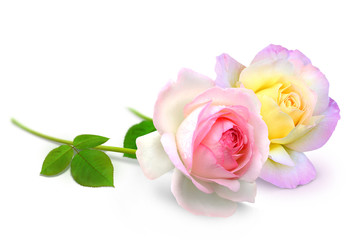 Blumen 919