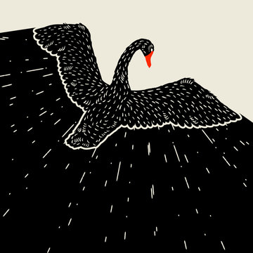 Background with flying black swan. Hand drawn bird