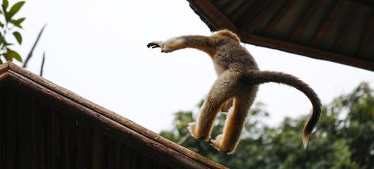 Monkey feeding in the zoo
