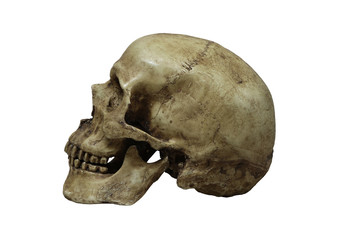 Beside of human skull isolate on whithe background, with clipping path..