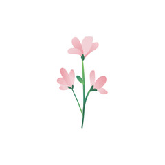 Vector cartoon abstract pink flower icon. Meadow garden spring easter women day romantic holiday, wedding invitation card decoration element summer floral Illustration white background