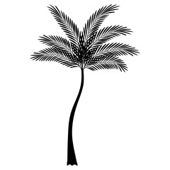 Wall Mural - tropical tree palm icon vector illustration design