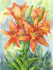 Watercolor orunge garden flowers. Spotted lilies