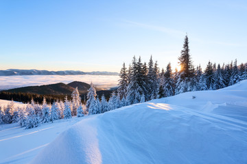 On a frosty beautiful day among high mountains and peaks are magical trees covered with white fluffy snow against the beautiful winter landscape. Morning lights. Fantastic winter scenery.