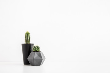 Two cactuses on a white table or shelf with copy space.
