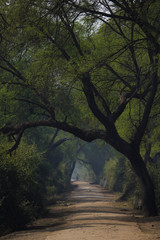 A path in keoladeo national park.
