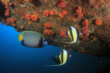 Fish underwater coral reef