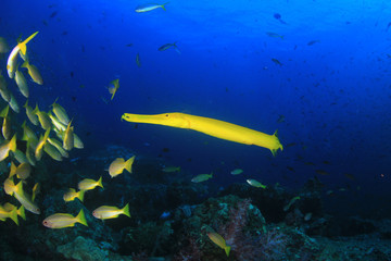 Fish on underwater coral r eef
