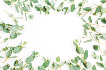 Frame of eucalyptus branch pattern on white background. Flat lay, top view.