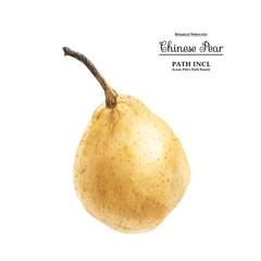 Fresh Yellow Chinese Pear