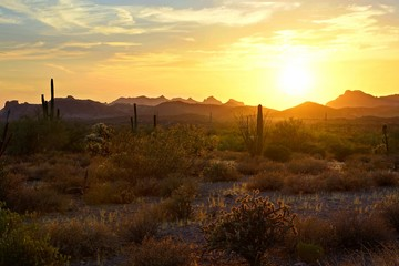Wall Mural - Beautiful sunset view of the Arizona desert with Saguaro cacti and mountains