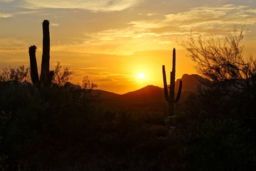Wall Mural - Sunset silhouette view of the Arizona desert with Saguaro cacti and mountains