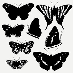 Set of butterflies silhouettes. Vector Butterfly icons isolated on grey background.