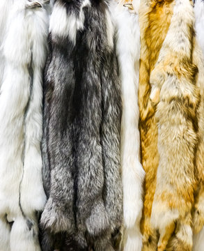 Dark marble artic and red fox furs