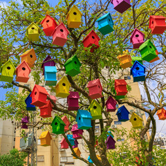 Bright colored birdhouses on a mandarin tree
