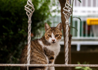 Street Cat with Gorgeous Eyes Sitting in the Fence