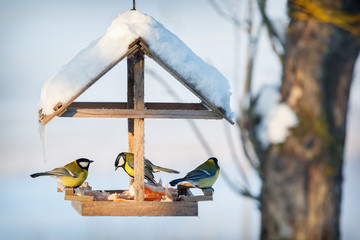 Papiers peints Oiseau Three tit in the snowy winter bird feeder eating pork fat