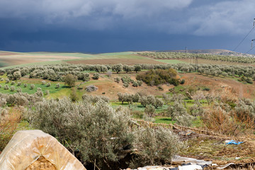Volubilis near Meknes in Morocco. Volubilis is a partly excavated Amazigh, then Roman city in Morocco situated near Meknes.