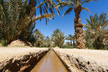 Oasis in the middle of a desert (Morocco)