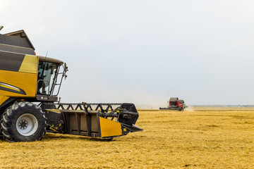 Harvesting wheat with a combine harvester.